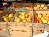 Apple lady will advise you on the best apples from compotes for the children to Tarte Tatin
