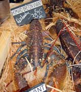 Living lobster from Brittany.  The owner's son is being trained to take over the business
